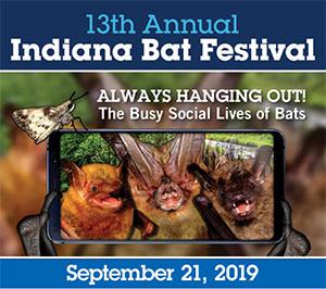 Bat Festival 2019