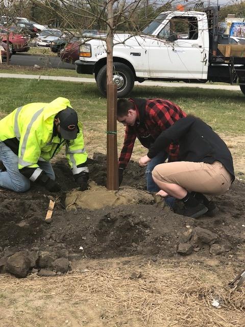 21st Century Scholars Community Service- Tree Planting